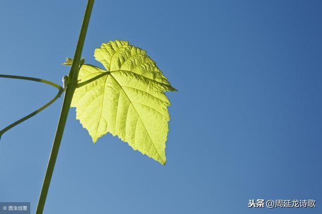 七絕:盼春