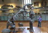 有沒有比劍齒虎厲害的哺乳動物?
