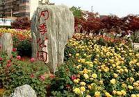 鄭州月季公園(月季花海)