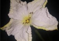 小菜園裡種的葫蘆、黃瓜等蔬菜上有好多螞蟻,有什麼不用農藥的辦法除掉螞蟻嗎?