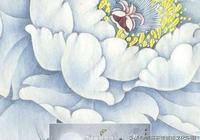 白茶中的佼佼者——白牡丹的祕密