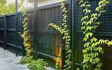 花架合集:n款爬藤植物花架送給你,讓你的庭院私家花園更有氣質
