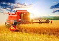 農民豐收節專題:四野豐收在望