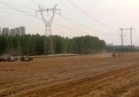 麥子倒伏 大雨溼地 武陟小麥這麼收