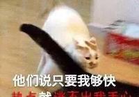 """女子中巡眾小姐姐表白""""虎""""愛豆"""