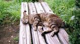 動物圖集:活潑可愛的貓咪