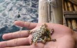 大哥海邊撿到可愛小生物,被友人打手叮囑:趕緊扔掉