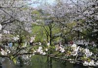 在這春暖花開的季節,讓你張口而來的詩句有哪些?