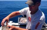 漁民發現鮮為人知的世代交替生物