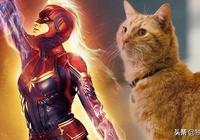 《驚奇隊長》卡羅爾其實並不重要,那隻橘貓才是最強大的!