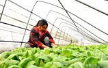 農村伢子將蔬菜種在花盆裡,12元一盆,年前大雪讓他損失了100萬