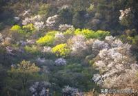 大別山的春天
