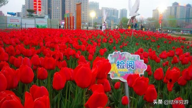 咸陽湖賞花季,鬱金香盛開景色美