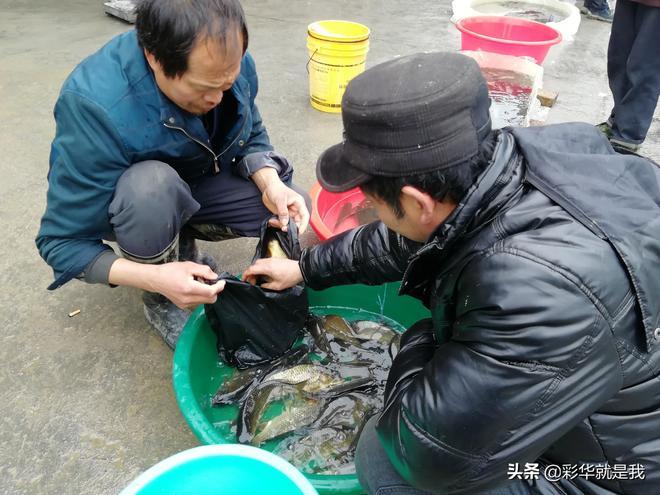 彩華家在集市上買了100元魚苗,看看到年底有多少收穫!滿懷希望