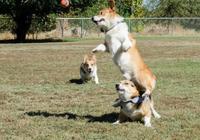 這隻狗狗超像孫紅雷,孫紅雷:明明是林永健