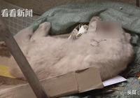 小區天上掉下一隻貓砸中男子腦袋……貓死了人懵了