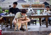《往生》狗群全被領養,它們過得太幸福了吧