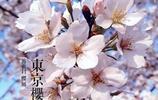 春花燦爛,送給愛花的你,太美了~