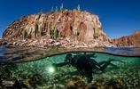 國家地理攝影作品欣賞,海洋守護日之海洋之心,珍愛動物保護家園