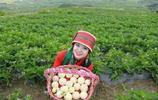 女大學生回農村創業種植人蔘果,一畝收益2萬,年入幾十萬