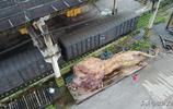 200多萬雕出世界上最大的獅子,300萬沒出手,淪落在廠房成了睡獅