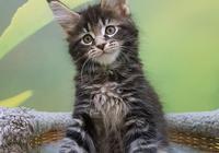 一張圖證明家裡有貓?小意思,貓咪闖禍的照片一百張都能拿出來!