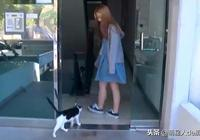 """流浪貓一路跟蹤女孩,一進門就把狗子打了一頓!狗:""""憑什麼?"""""""