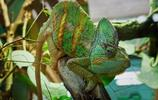 動物圖集:奇形怪狀的蜥蜴
