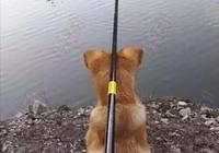 養狗千日,用狗一時!