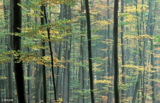 樹林中,湖泊邊