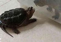 烏龜要和水裡的傢伙幹架,剛準備出手教訓,結果被人家弄得秒慫!