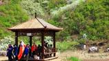 遼東最美的春天,撫順梨花谷,五一小長假遊人如織