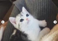 當你決定養一隻貓了,你需要提前做這些,接下來就是十幾年的陪伴