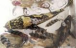 中秋節 帶你看海鮮市場溫馨的畫面 虎斑魚帶斑馬魚像母親帶孩子