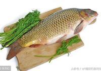 你瞭解魚嗎?這些魚兒的知識你知道嗎?釣魚的你該知道!