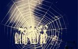 老照片:1927年最早的西遊記電影,圖1是當時的特效,圖6為豬八戒