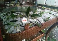 綿陽江油城區突降冰雹 滿地冰雹如鵪鶉蛋