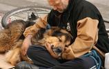 狗狗這位小天使,與流浪人不離不棄朋友情誼