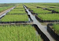 """農村大爺在稻田裡養""""它"""",每畝上萬,年入能達十幾萬?"""