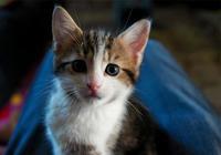 為什麼貓咪離家出走後就不願意再回來了?