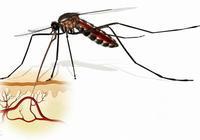霍普金斯大學:利用轉基因蚊子與野生蚊子交配減少瘧疾傳播