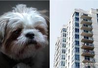 2歲女兒被狗咬,失控爸怒抓西施犬從12樓摔下,你怎麼看?