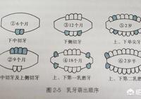 寶寶出牙的徵兆、時間、順序是怎樣的?如何護理?