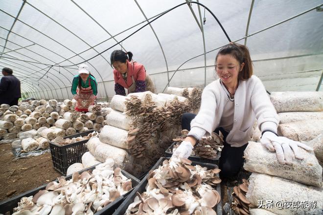 貴州大山裡曾經的深度貧困村,現在路寬電通種上食用菌,市場緊俏
