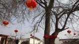 90歲農村老人守護一棵300年大樹,大樹有特殊功能多少錢都不賣