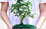 鄭重提醒大家:不管房子大和小,客廳一定要擺些盆栽,為健康著想