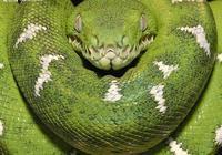 胎生蛇與卵生蛇有什麼區別?