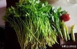 有誰吃過這種營養美味的野菜,這樣做出來味道不是一般的好吃