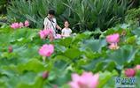 近日,福州各公園內的荷花進入盛花期,吸引遊人前來賞荷、拍照