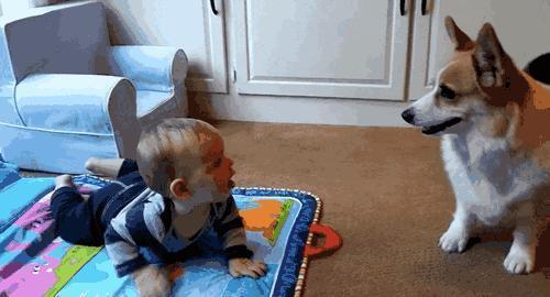 這5種人都很喜歡養狗,你是不是其中的一種?